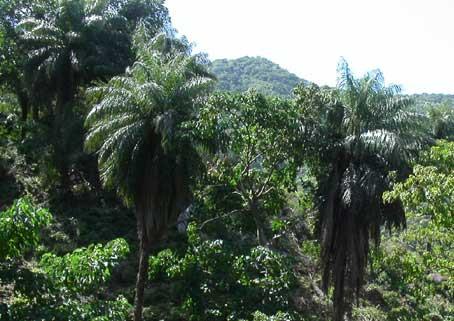 palmhike.jpg